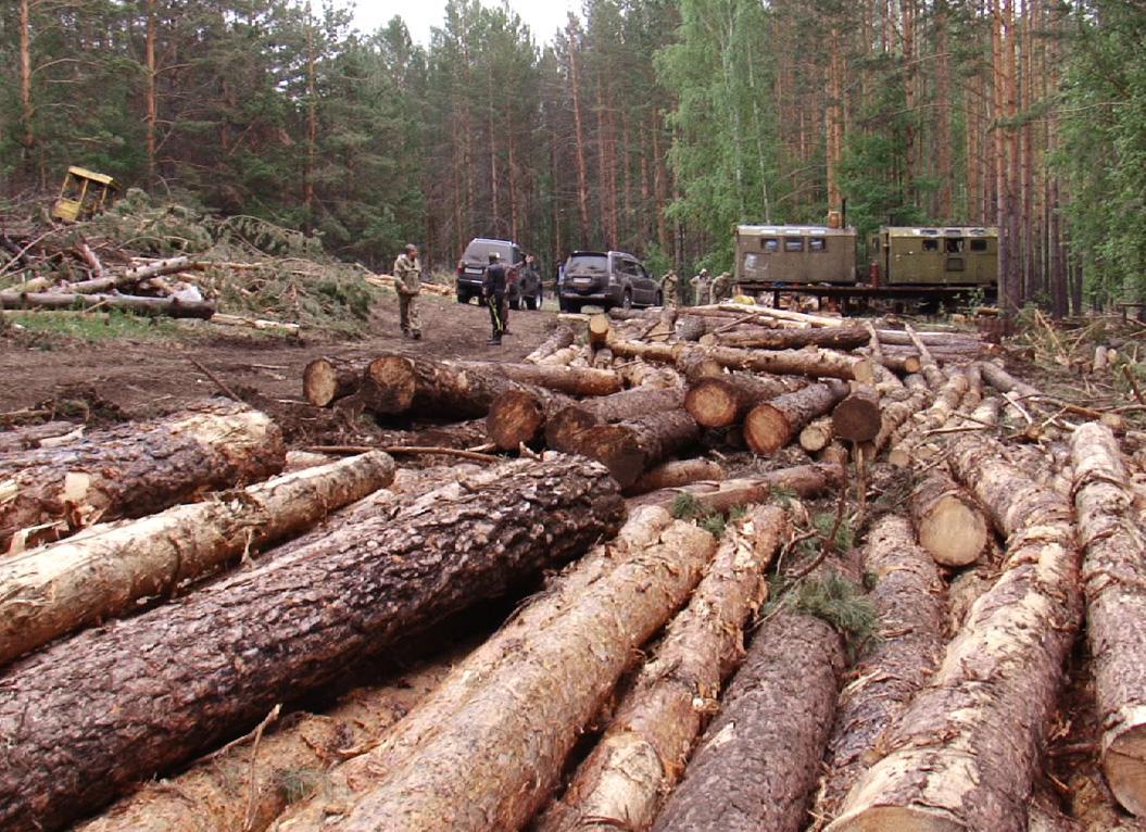 9,000m3 of timber including Spruce, Pine, Fir and Cedar harvested illegally near Krasnovishersk